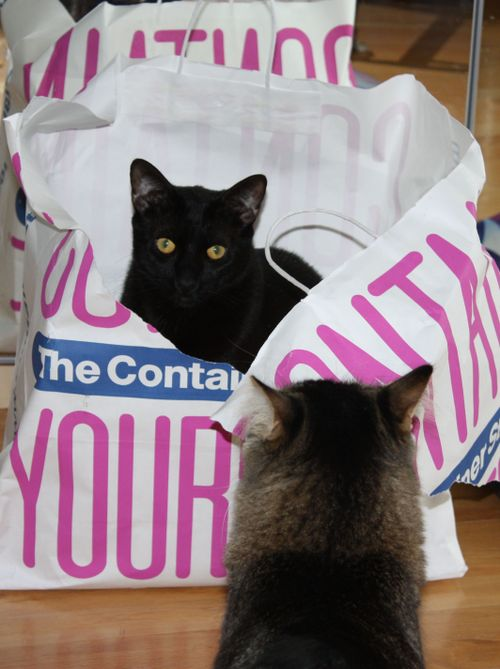 Lickity in a the bag