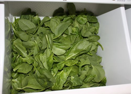 Spinach_in_crisper_2