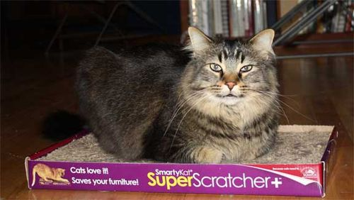 Snapdragon-on-smarty-cat-superscrather