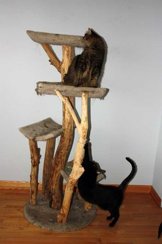 Cat-tree-action-shot