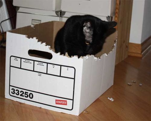 Licity-shredding-box