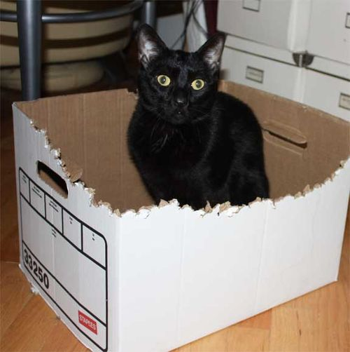 Lickity-in-box